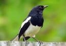 Tả một con chim thường gặp hằng ngày mà em thích nhất