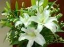 Tả hoa huệ