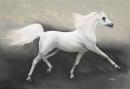 Kể lại câu chuyện Đôi cánh của ngựa trắng