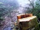 Việc khai thác, sử dụng đất và rừng không hợp lí