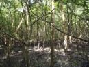 Nêu tình trạng suy giảm tài nguyên rừng