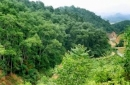 Nhận xét sự biến động diện tích rừng qua