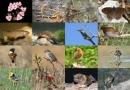 Sự suy giảm tính đa dạng sinh học của nước