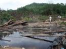 Vấn đề chủ yếu về bảo vệ môi trường nước ta là gì ? Vì sao?