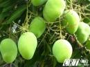 Chứng minh rằng việc đẩy mạnh sản xuất cây công nghiệp và cây ăn quả góp phần phát huy thế mạnh của nông nghiệp nhiệt đới nước la.