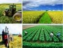 Phát triển nền nông nghiệp hiện đại sản xuất hàng hóa góp phần nâng cao hiệu quả của nông nghiệp nhiệt đới