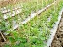 Ngành trồng trọt