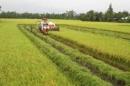 Việc sử dụng đất trong điều kiện nông