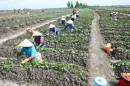 Hãy lấy ví dụ chứng minh rằng các điều kiện tự nhiên tạo ra nói chung của sự phân hóa lãnh thổ nông nghiệp, còn các nhân tố kinh tế - xã hội làm phong phú thêm và làm biến đổi sự phân hóa đó.