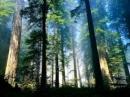 Hãy nêu hiện trạng phát triển trồng rừng và các vấn đề phát triển vốn rừng ở nước ta hiện nay.