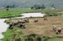 Bài 2: a) Hãy tính tỉ trọng của trâu, bò trong tổng đàn trâu bò của cả nước, Trung du và miền núi Bắc Bộ, Tây Nguyên