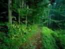Tại sao trong khai thác tài nguyên rừng ở Tây Nguyên, cần hết sức chú trọng khai thác đi đôi với tu bổ và bảo vệ vốn rừng?