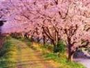 Cảm nhận về mùa xuân trong thơ Hồ Chí Minh