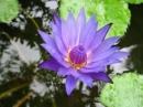 Bình giảng khổ thơ đầu bài Mùa xuân nho nhỏ của Thanh Hải. ngữ văn lớp 9