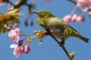 Một nốt trầm xao xuyến... đọc Mùa xuân nho nhỏ của Thanh Hải