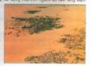 Hoang mạc đang ngày càng mở rộng