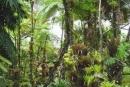 Bảo vệ tài nguyên rừng