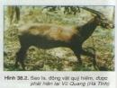 Bảo vệ tài nguyên động vật