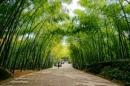 Cảm nghĩ về cây tre Việt Nam