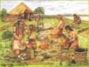 Ở giai đoạn đầu, Người tinh khôn sống như thế nào?