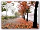 Phân tích những cảm nhận tinh tế của Xuân Diệu trước thiên nhiên thể hiện trong bài Đây mùa thu tới
