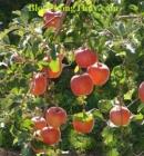 Em hãy tả một cây ăn quả đang trong mùa quả chín (mít, vải, na hoặc sầu riêng, vú sữa)