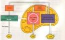 Khái niệm hô hấp tế bào