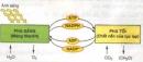 Các pha của quá trình quang hợp