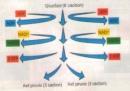 Các giai đoạn chính của quá trình hô hấp tế bào