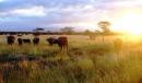 Hãy viết một bài văn khoảng 20 - 25 dòng tả đàn trâu về vào buối chiều thật êm ả ở nông thôn