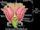 Sinh sản hữu tính ở thực vật