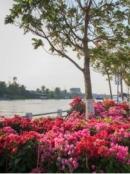 Tả bồn hoa đẹp ở trong công viên