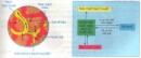 Bài 1 trang 44 SGK Sinh 8