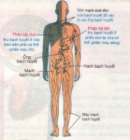 Bài 1 trang 53 SGK Sinh 8