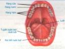 Lý thuyết bài tiêu hóa ở khoang miệng