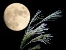 Em hãy miêu tả cảnh một đêm trăng ở quê em mà em cảm thấy thích nhất