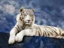 Phân tích nhân vật con hổ trong bài thơ Nhớ rừng của Thế Lữ