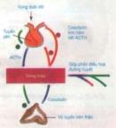 Lý thuyết bài sự điều hòa và phối hợp hoạt động của các tuyến nội tiết