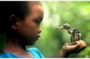 Hình dung và kể câu chuyện chú bé và con chim