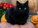 Tả hình dáng và hoạt động của con mèo nhà em hoặc con mèo em thường thấy