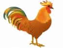 Hãy tả một con gà trống nhà em