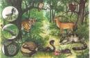 Thế nào là một  hệ sinh thái ?
