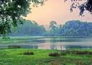 Bảo vệ các hệ sinh thái rừng
