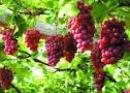 Viết một đoạn văn khoảng 5 câu về một loại trái cây mà em thích, trong đoạn văn có dùng một số câu kể Ai thế nào?