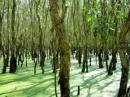 Bài 4: Tả một cây có bóng mát mà em yêu thích