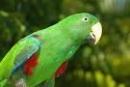 Quan sát ngoại hình và hoạt động của một con vật mà em yêu thích và viết một đoạn văn miêu tả con vật đó.