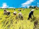 Dựa vào bài Quang cảnh làng mạc ngày mùa, em hãy viết bài văn tả cảnh làng em vào mùa thu hoạch