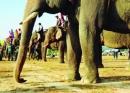 Thuyết minh về Lễ hội đua voi ở Tây Nguyên - Ngữ Văn 12