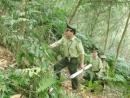Rừng mang lại cho chúng ta rất nhiều lợi ích. Do đó, con người phải bảo vệ rừng. Em hãy chứng minh điều đó