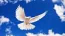 Nghị luận xã hội vể chiến tranh và hòa bình - Ngữ Văn 12